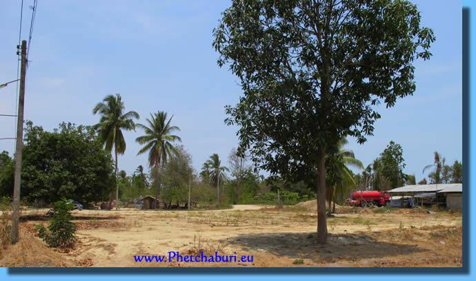 Kokosnuss und Mango Bäume auf dem Grundstück Cha-Am